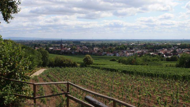 Spooky Grape News – Stolen Vineyards